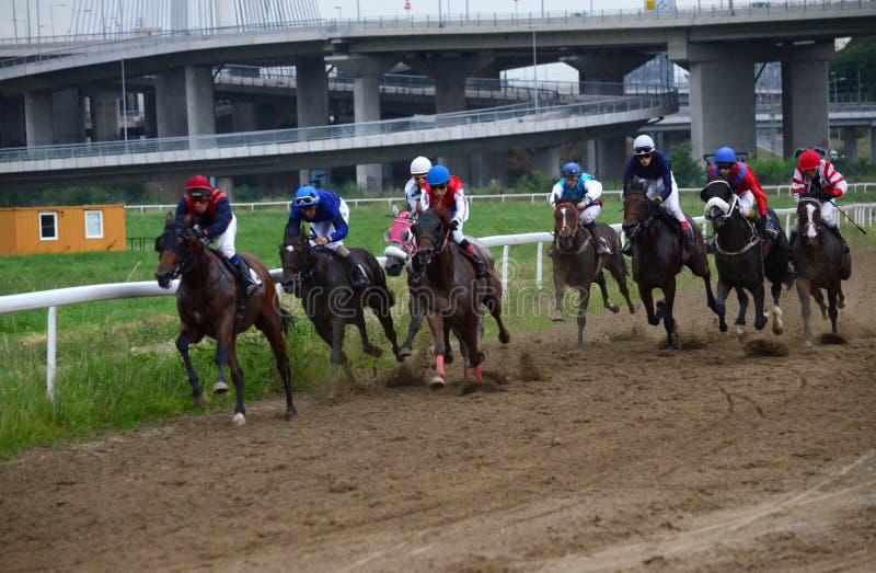 Неопознанные лошади и жокеи скакать в гонке на Hippodrome Белграда 19-ого июня 2016 в Белграде, Сербии стоковые фото