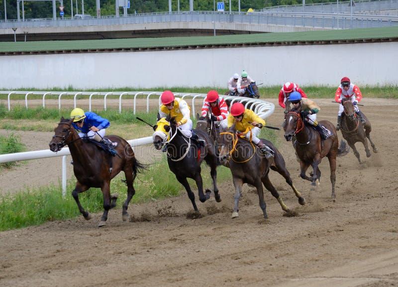 Неопознанные лошади и жокеи скакать в гонке на Hippodrome Белграда 19-ого июня 2016 в Белграде, Сербии стоковые фотографии rf