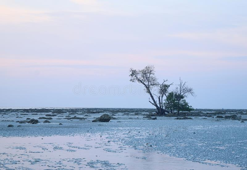Неподвижность и уединение - ландшафт с одиночным деревом, скалистой землей, и ясным небом - минимализм - немногочисленность воды стоковые изображения rf