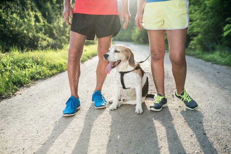 Непознаваемые старшие бегуны с собакой снаружи в солнечной природе стоковое фото