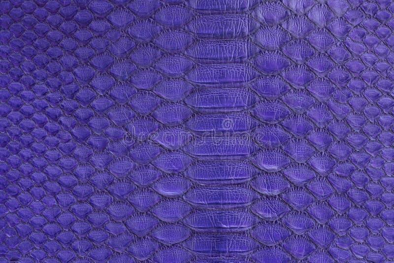 Неподдельная кожа snakeskin питона, кожа змейки, предпосылка текстуры стоковые фото