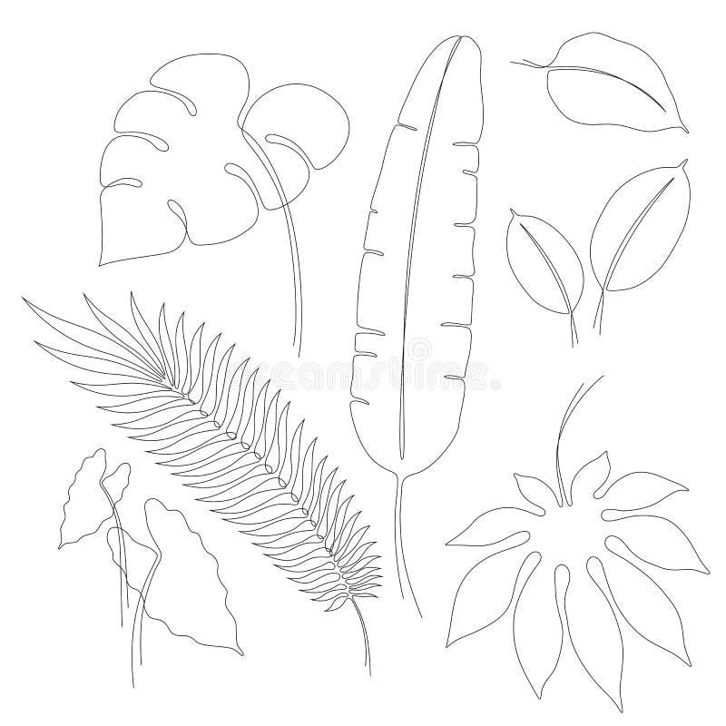 Непрерывные карандашные рисунки различных тропических листьев иллюстрация вектора