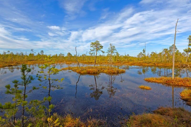 Непроходное болото в Сибире стоковое фото