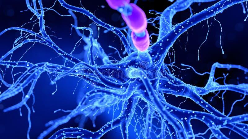 Нервная клетка бесплатная иллюстрация