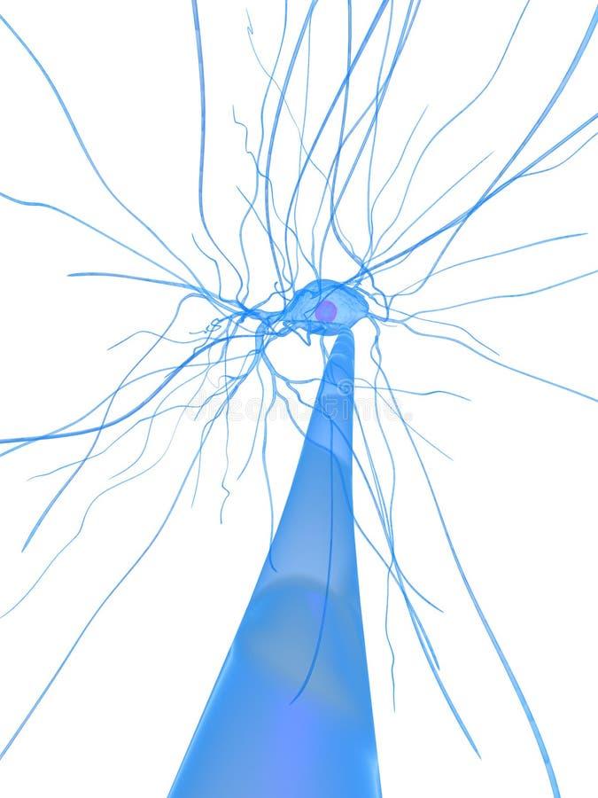 нерв клетки иллюстрация штока