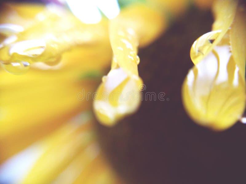 нерезкости стоковое фото rf