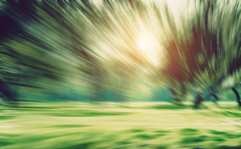 Нерезкость движения долгой выдержки парка лета стоковое фото rf