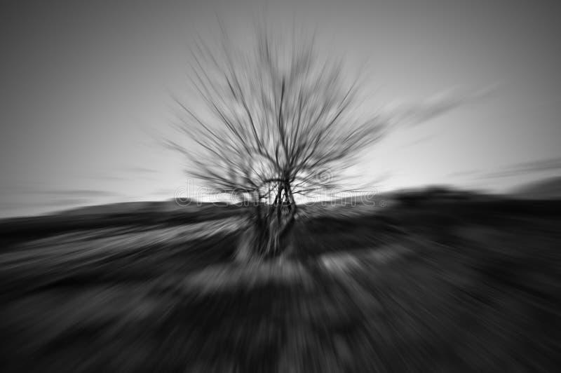 Нерезкость движения одиночного дерева стоковое изображение rf