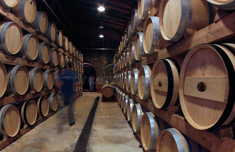 Несется wineyard в острове mallorca стоковые изображения