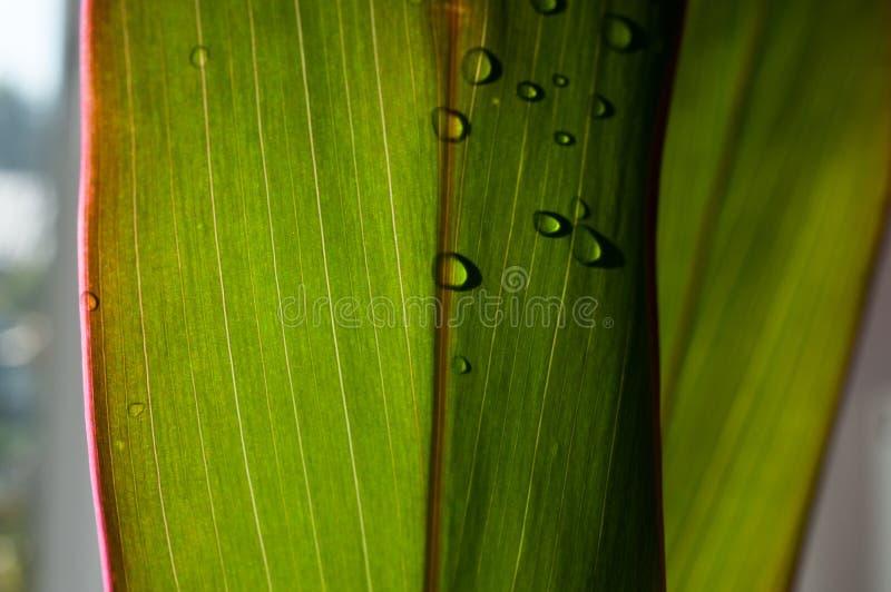 Несколько капель на красочном листе в тени стоковая фотография rf