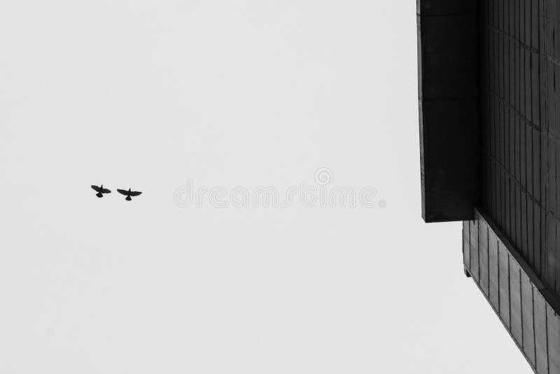 Несколько птицы стоковое изображение rf