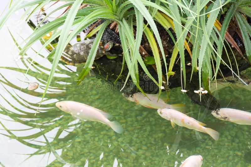 Несколько рыб на рыбном пруде стоковая фотография