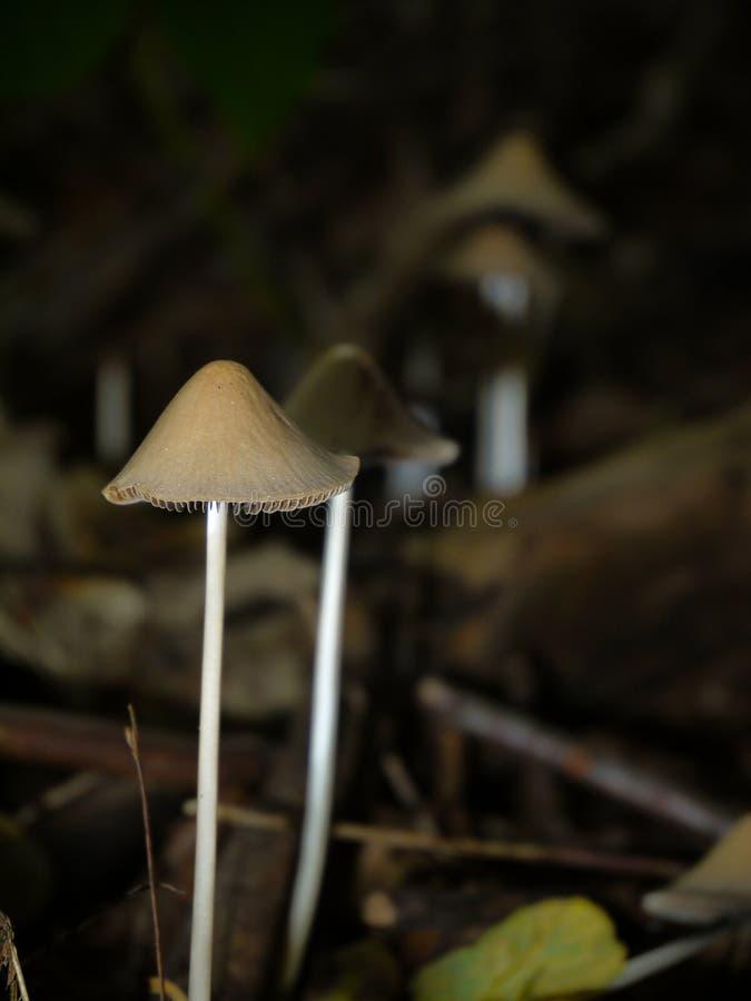 Несколько грибы стоковая фотография rf