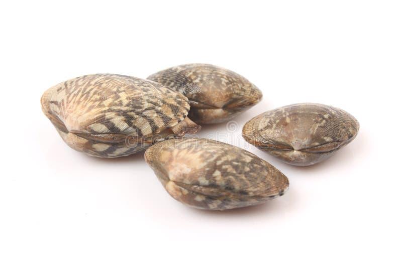 Несколько свежих clams стоковая фотография