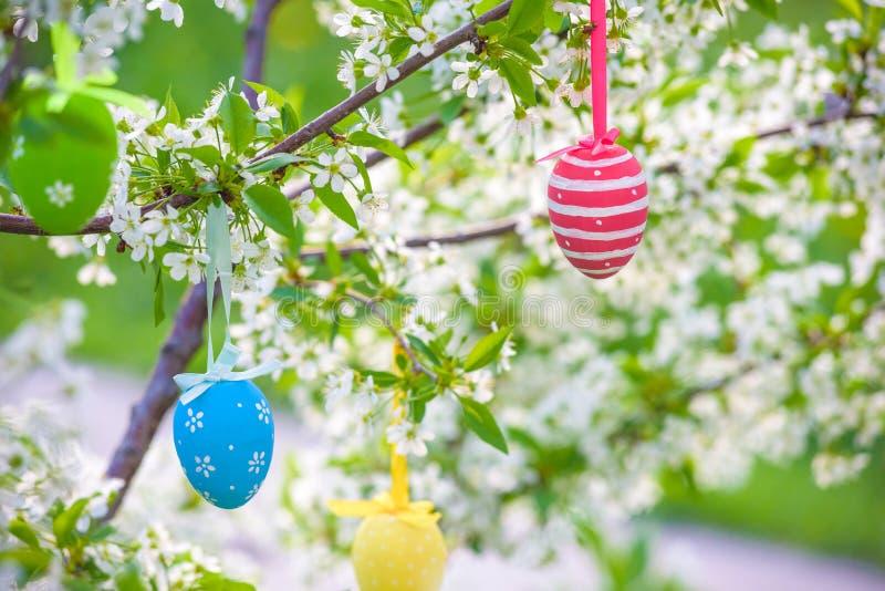 Нескольк пасха покрасила яичка вися на весенний день цвета ветви дерева солнечный стоковое изображение rf