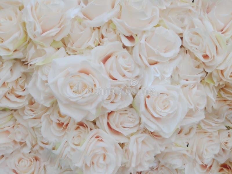 Несосредоточенные лепестки розы нерезкости, запачканные сладких роз в стиле пастельного цвета на мягкой текстуре bokeh нерезкости стоковое изображение