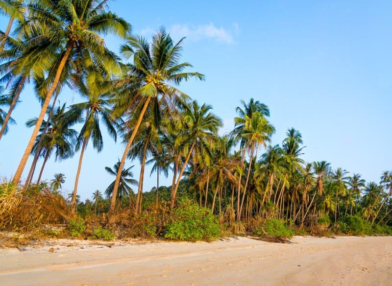 Download нетронутое пляжа тропическое Стоковое Фото - изображение насчитывающей остров, природа: 40583238