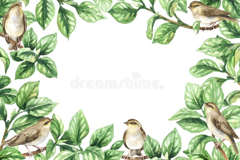 нет градиента рамки птиц флористическое иллюстрация вектора