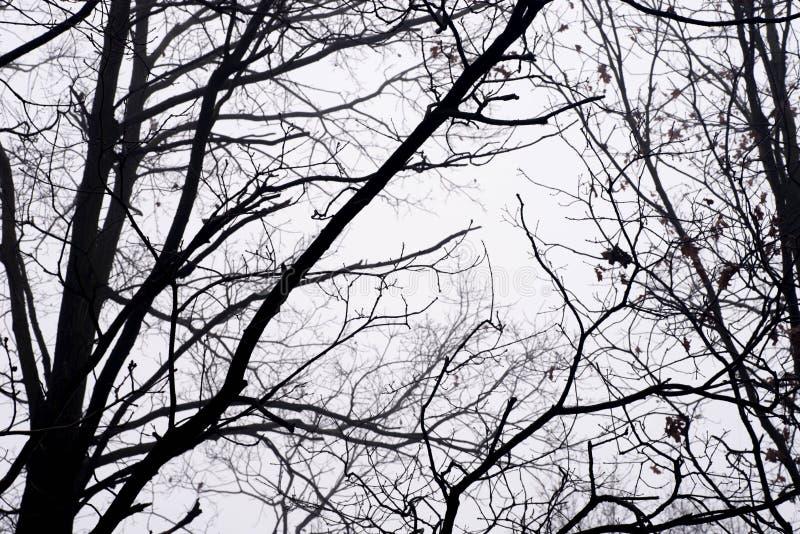 Неурожайные ветви дерева против неба на туманном утре стоковые изображения