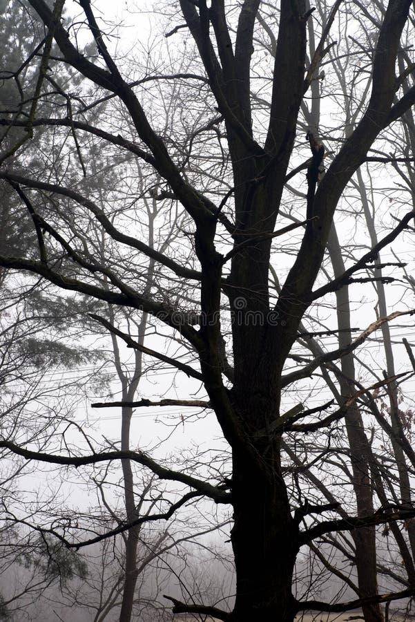 Неурожайные ветви дерева против неба на туманном утре стоковое изображение