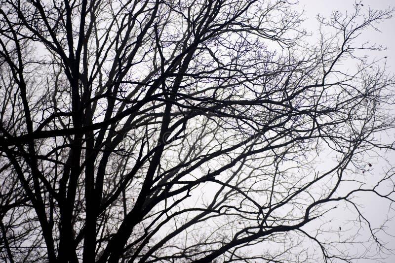Неурожайные ветви дерева против неба на туманном утре стоковые изображения rf