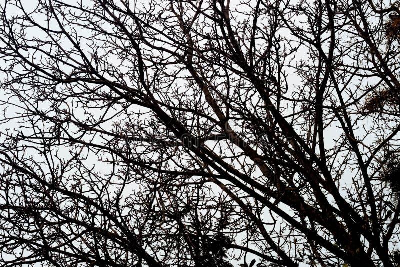 Неурожайные ветви дерева против неба стоковая фотография