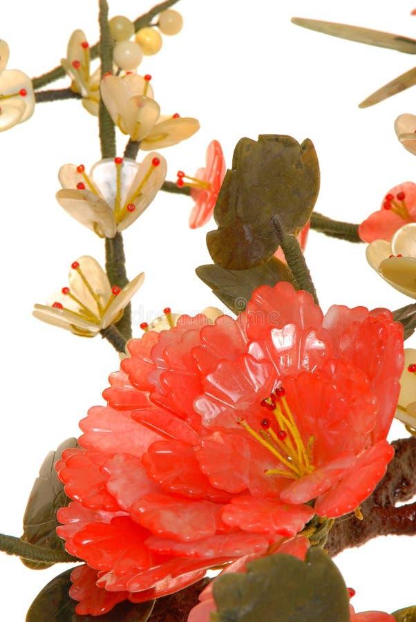 нефрит вишни 11 цветения стоковое изображение