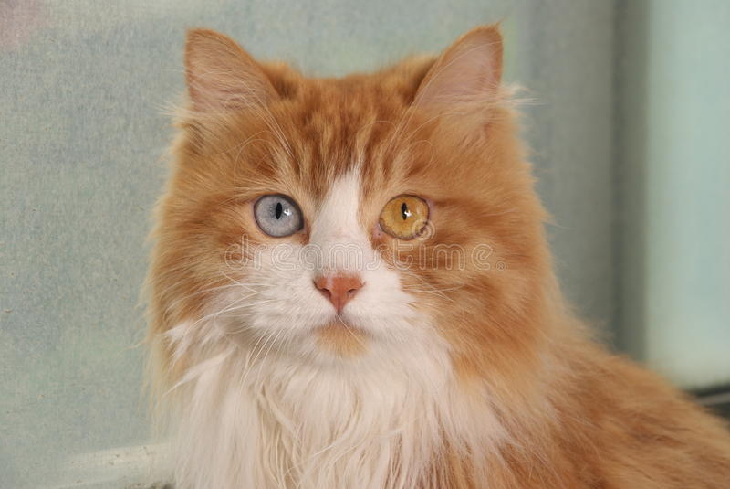 нечетное eyed котом стоковое изображение