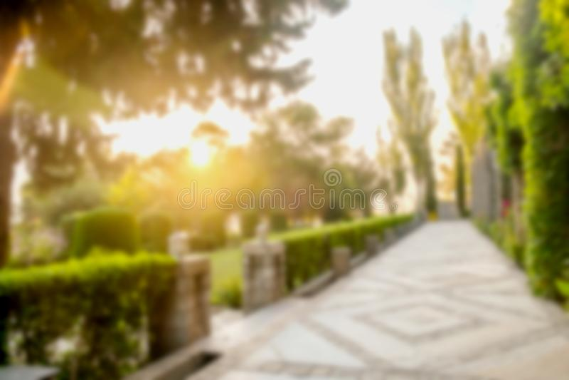 Неясное изображение восхода солнца над зеленым садом стоковые изображения rf
