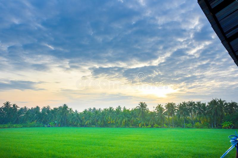 Нива в утре на Таиланде, красивая зеленая нива с предпосылкой неба захода солнца стоковые изображения rf