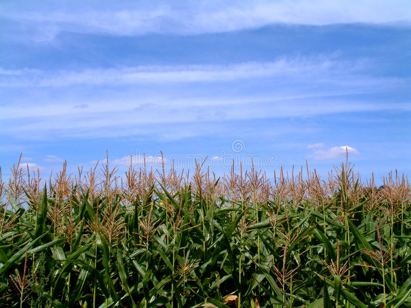 Download Нива стоковое фото. изображение насчитывающей farming, страна - 75524