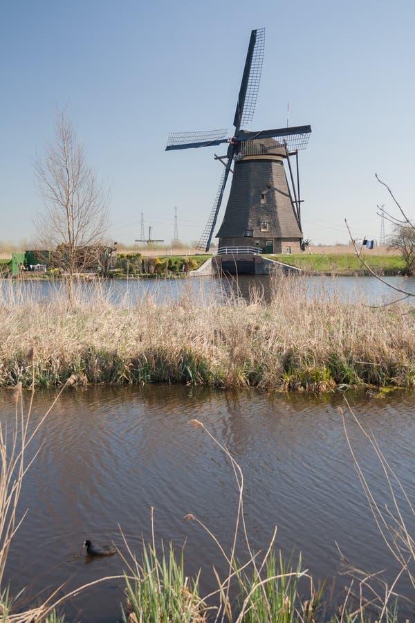 Нидерланды, голландский ландшафт ветрянок на Kinderdijk около Роттердама, места всемирного наследия ЮНЕСКО стоковые фотографии rf