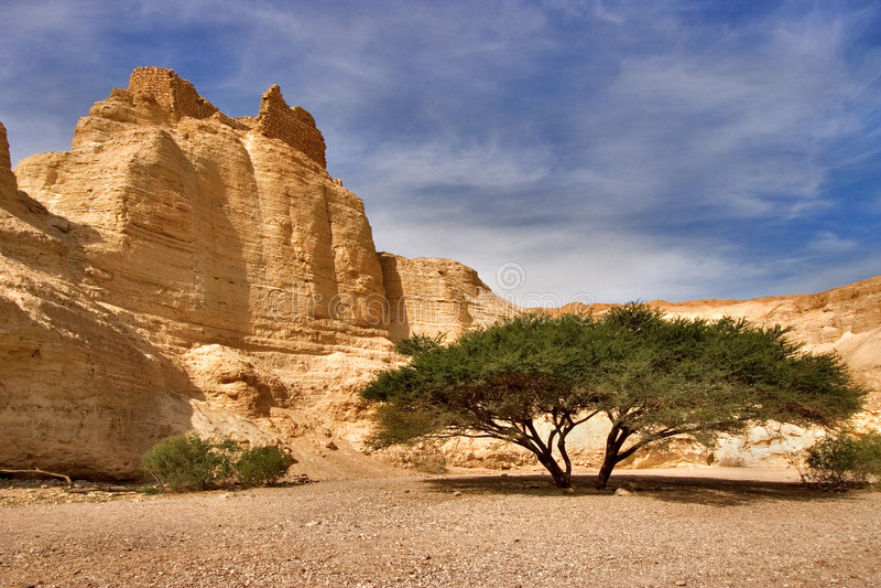 нижний вал каньона стоковые фото
