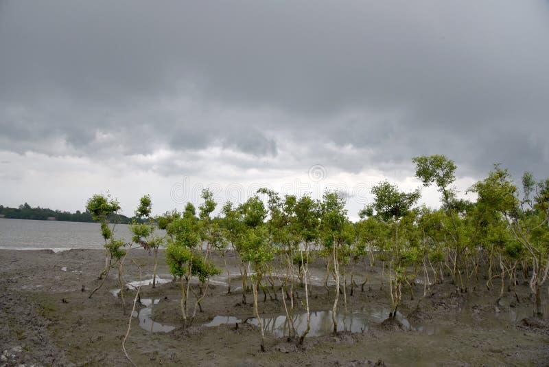 Низкая земля в Индии стоковое фото rf