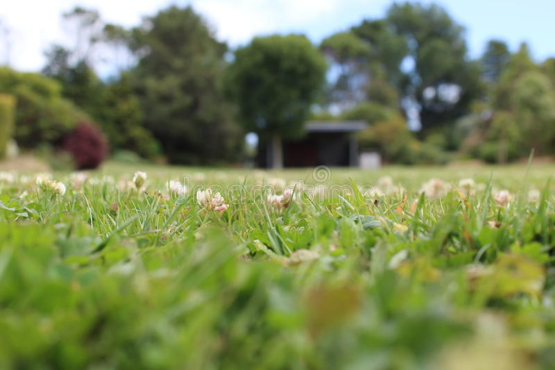 Низкая земная съемка травы и цветков стоковое фото