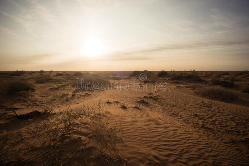 Низкие кустарники в засушливой пустыне стоковая фотография