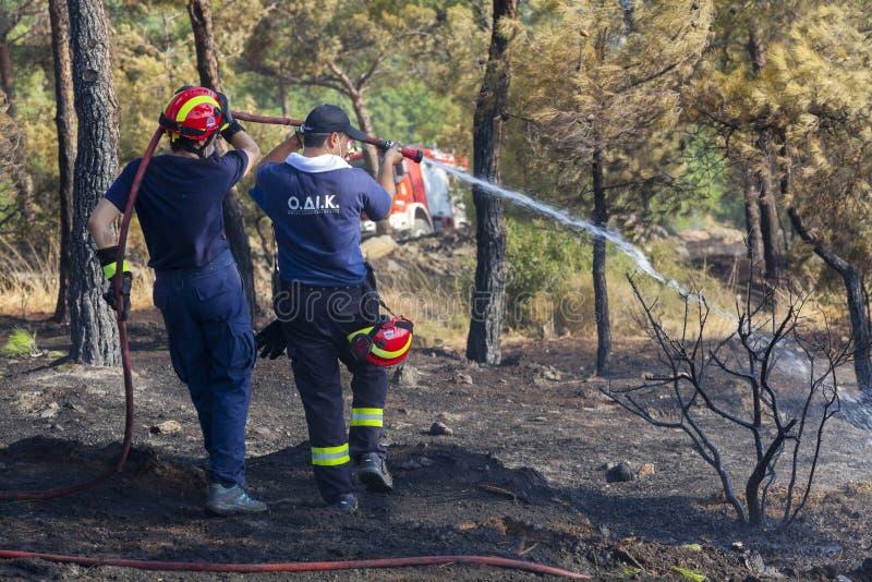 Низкий пожар на пуще Seich Sou - Thessaloniki маштаба, Греция стоковое изображение rf