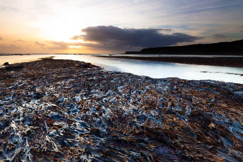 низкий прилив seaweed стоковая фотография rf