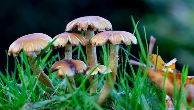 Низкоуровневый взгляд группы грибков в влажной траве стоковое изображение rf