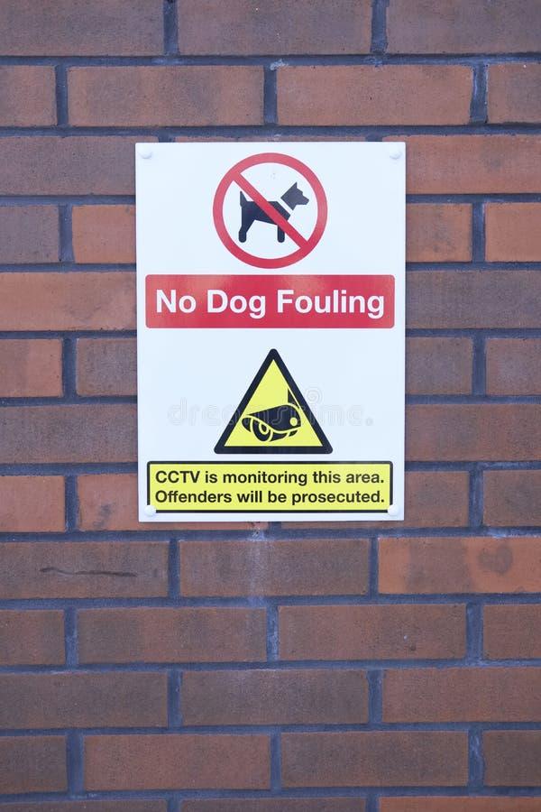 Никакая собака пакостя предупредительный знак cctv на стене на безопасности рабочего места общественного офиса не предотвращает з стоковые изображения