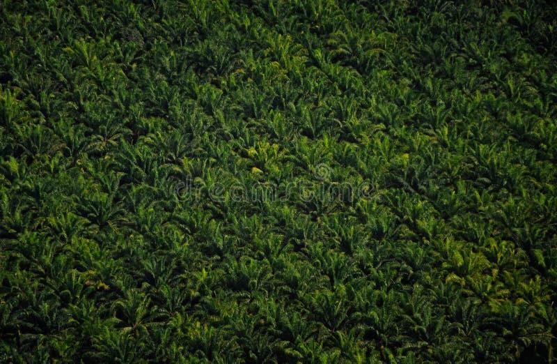 Никогда не кончать тропические плантации стоковые изображения