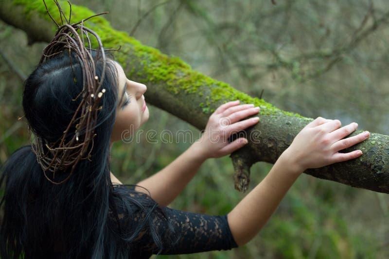 Нимфа леса стоковая фотография rf