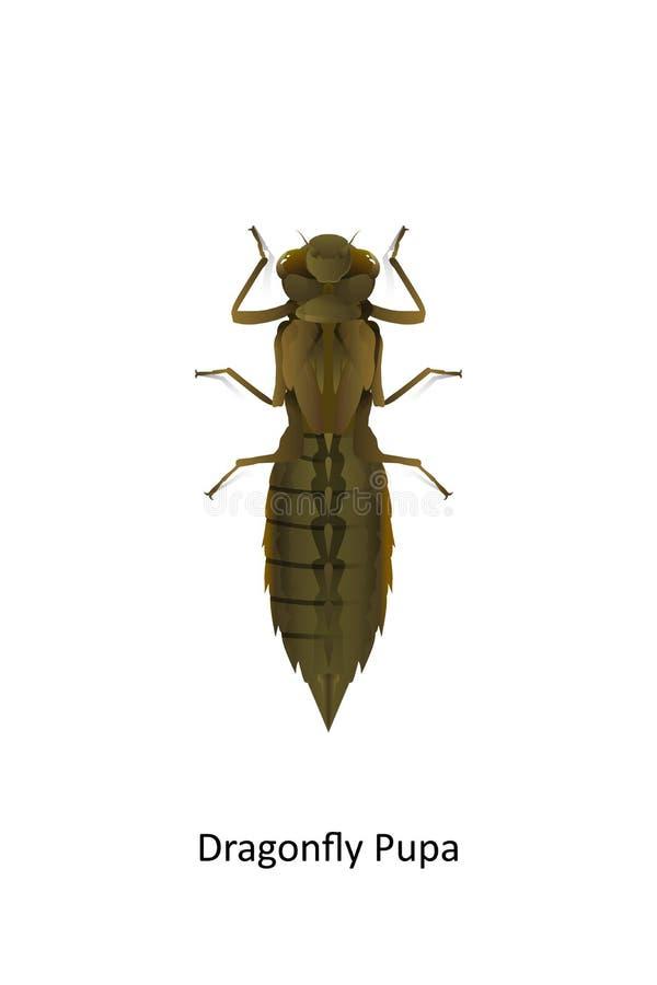 Нимфа dragonfly на белой предпосылке Хищник и вегетарианец насекомого иллюстрация штока