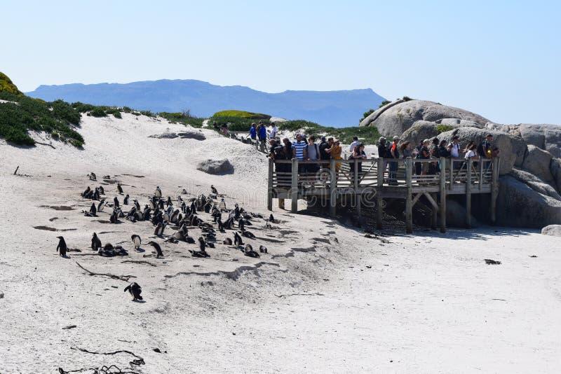 Ницца-жёлтая в булдерском пляже ЮАР стоковые изображения rf