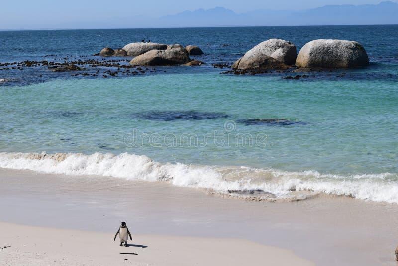 Ницца-жёлтая в булдерском пляже ЮАР стоковое фото rf