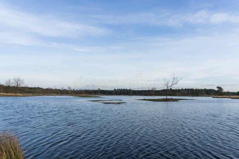 Нидерландский парк стоковое фото rf