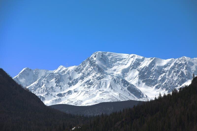 дни altai продолжают лето гор Красивейший ландшафт гористой местности Россия стоковое фото