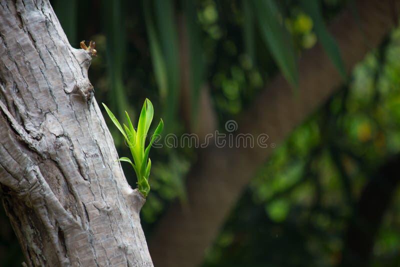 Новая ветвь на старом дереве весной стоковое изображение rf