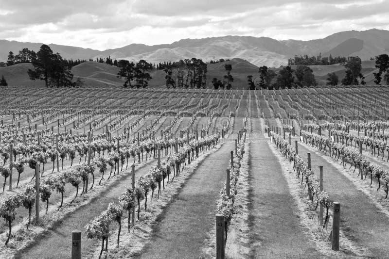 Новая Зеландия, виноградник, графство Marlborough стоковые фотографии rf