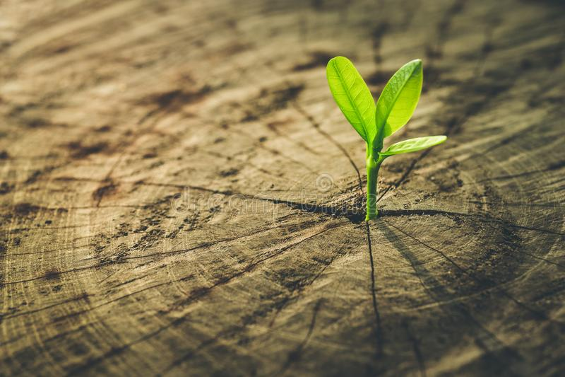 Новая концепция жизни с деревом ростка саженца растущим стоковые фотографии rf